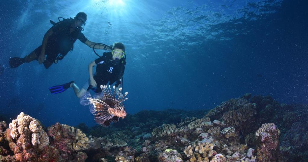 Plongee sous marine La Reunion