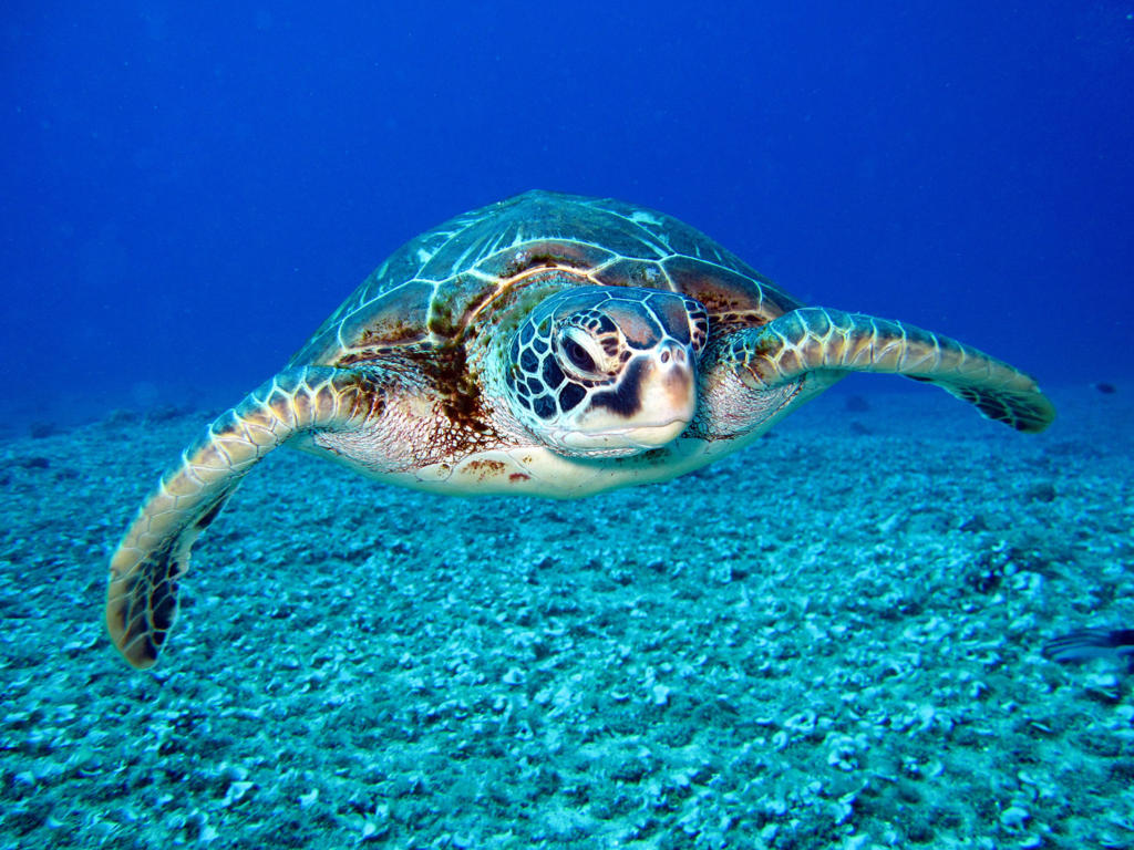 nager avec tortues