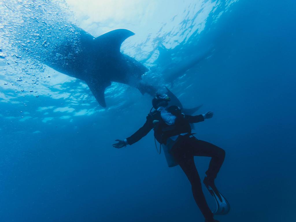 requins a la reunion